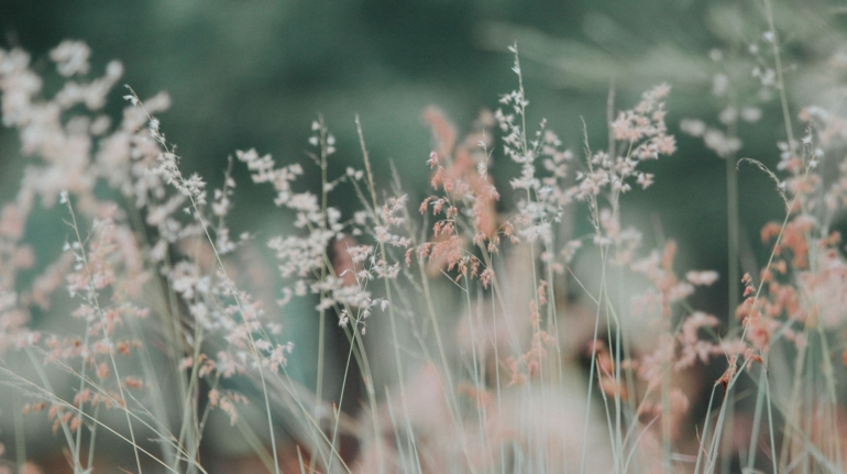 flora-flowers-grass-nature-268261